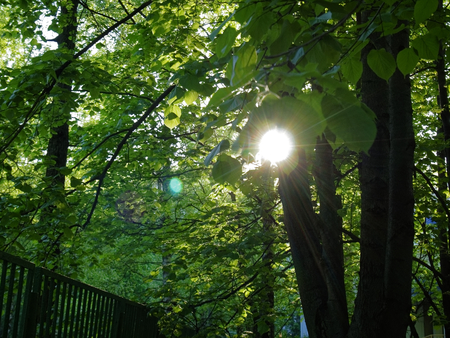 sunlight through the leaves of hazel spring, Moscow