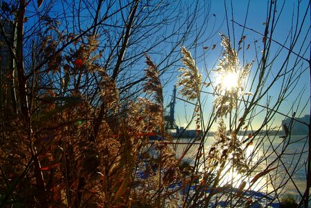 Reed in winter on the river Bank, Moscow