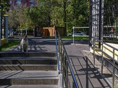 an old dog waits for the owner at the entrance to the Park, Moscow Stock fotó - 135468579