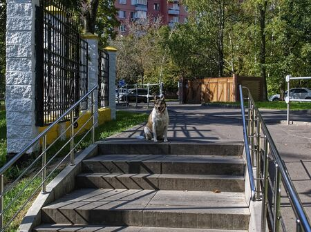 an old dog waits for the owner at the entrance to the Park, Moscow Stock fotó - 135468595