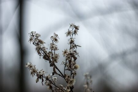 wild fluffy grass in autumn on a cloudy day, Russia