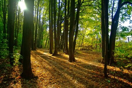 clear day in the autumn forest, Moscow Banco de Imagens