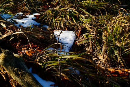 remnants of snow in the shade of spring trees