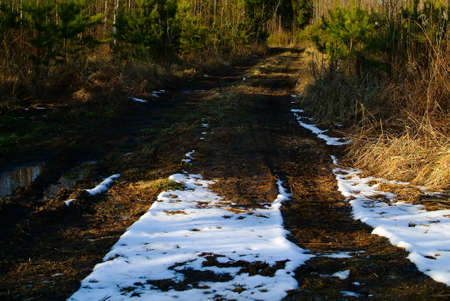 Dirt road through trees in spring, Russia