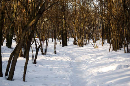 shadows from trees in the park, in winter