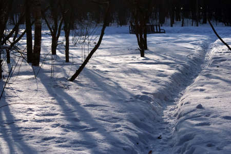 shadows from trees in the park, in winter Foto de archivo