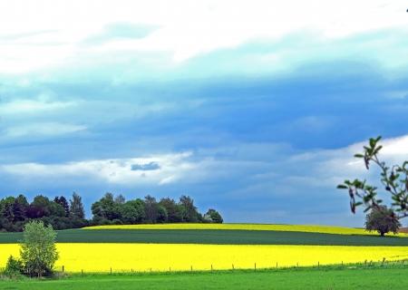 German agricultural landscape in spring