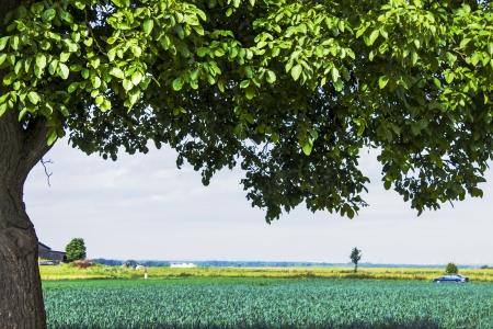 Landscape with leek field and apple tree in spring Stok Fotoğraf