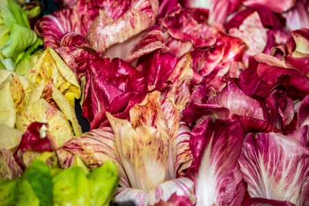Chicory and Radicchio  one biological family
