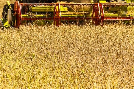 combine harvester: Cosechadora en el campo de trigo