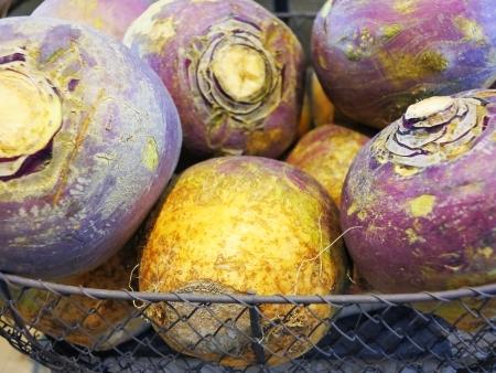 headed:  Fresh purple headed turnips Stock Photo