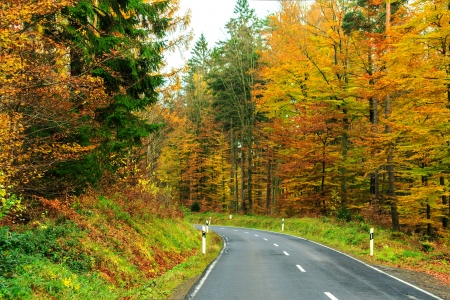 staining: Autumn forest road in Spessart Mountains, Germany