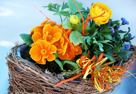 polyanthus: Spring in Easter willow nest Stock Photo