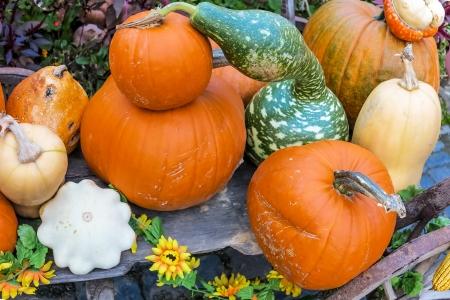 handcart: Pumpkins arrangement on handcart