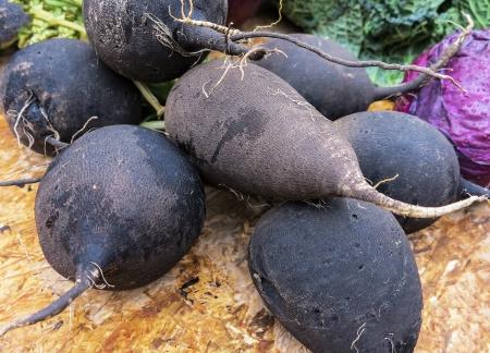 savoy cabbage: Black radish  Stock Photo