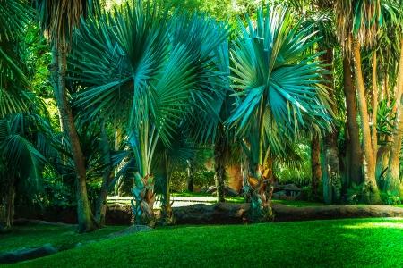 subtropical: Landscape with palm trees in a subtropical park