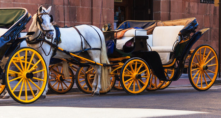 horse drawn carriage: Sightseeing with horse drawn carriage
