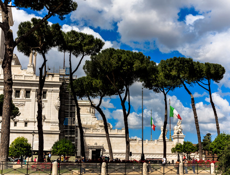 pine trees: Pine trees in Rome, near Piazza Venezia