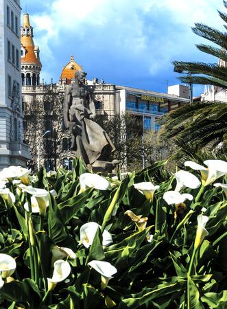 calas blancas: Flores blancas Callas en Barcelona, ??Espa�a