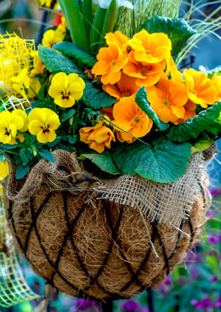 Yellow and orange spring flowers in a hanging basket photo