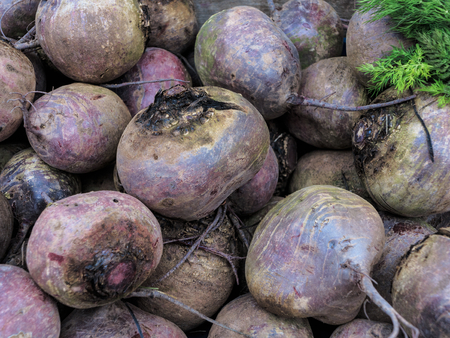 deep roots: Deep red roots of beetroot