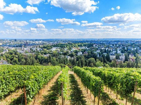 berg: Wiesbaden, view of the city from the Nero Berg, Hesse, Germany Stock Photo