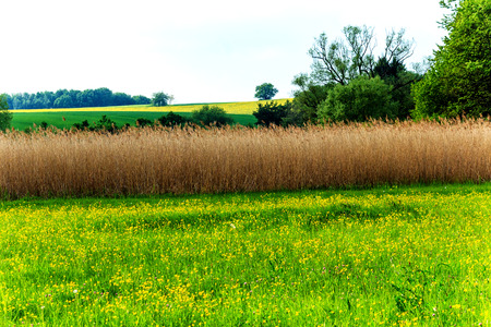 brooding: Landscape with reed field for protection of brooding birds Stock Photo