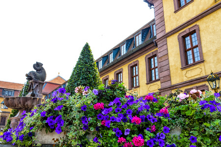 petunias: Blue Petunias front of the town Fontaine in Fulda Germany