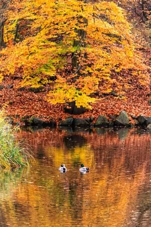 late fall: Late Fall at the Duck Pond