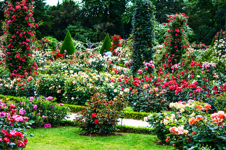 Paris- French landscape classic rose garden in the Bois de Boulogne in the Roseraie de Bagatelle