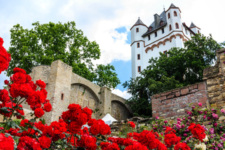 Red roses in Castle Garden of Eltville am Rhein, Germany Editöryel