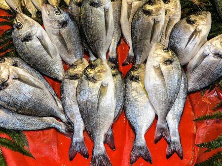 gilthead bream: Fresh gilthead bream arrangement on red background Stock Photo
