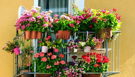 Balcony with many flower pots Archivio Fotografico