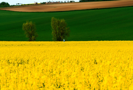 The Yellow and the Green. Hessian landscape with springfield near Hanau in late afternoon