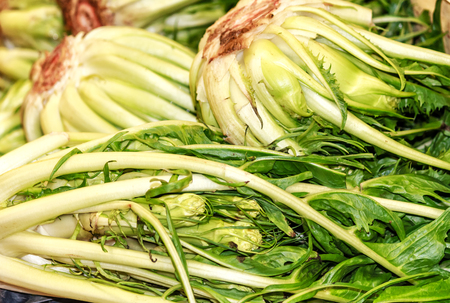 Puntarelle or cicoria di catalogna or cicoria asparago is a variant of chicory (Cichorium intybus)