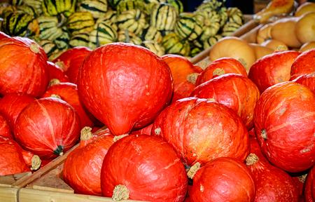 Case display- Hokkaido pumpkins also called Red Kuri (Cucurbita maxima)