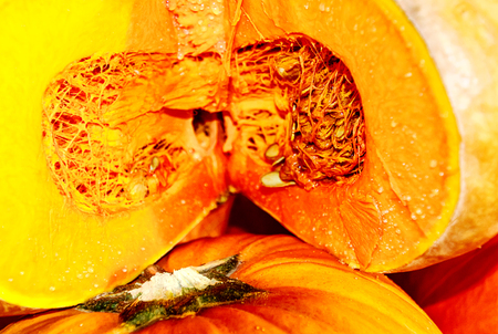 Thick, deep orange, moderately sweet flesh of fully ripe gorgeous Musque de Provence, or Fairytale pumpkin