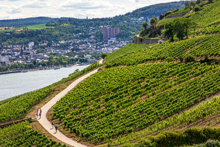Famous Vineyards slopping down to a medieval village of Rudesheim am Rhein, State of Hesse, Germany Archivio Fotografico