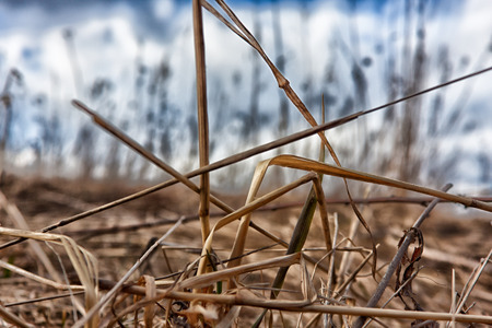 replaced: the dry grass at the beginning of spring will be replaced by green branches soon