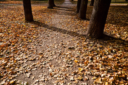 memoirs: nostalgic path in the park remembers many happy moments of your youth Stock Photo