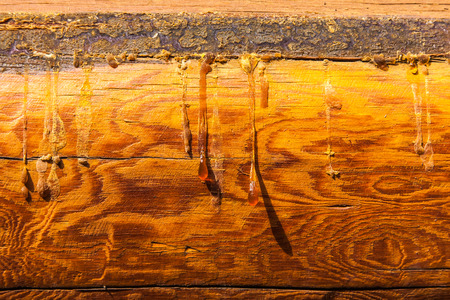 negligence: Wall fragment from the natural tree painted with a transparent varnish.