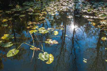 degradation: In water of an autumn pond yellow leaves float and the blue sky and trees are reflected. Stock Photo