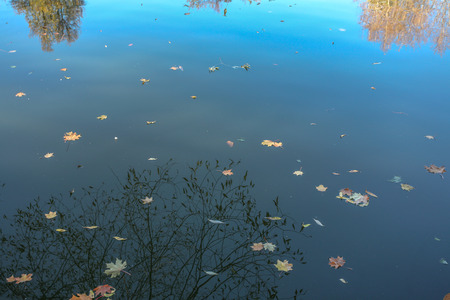 In water of an autumn pond yellow leaves float and the blue sky and trees are reflected. Stock Photo
