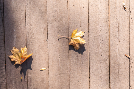 not painted: Yellow autumn leaves lie on a floor from not painted boards. Stock Photo