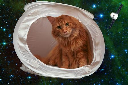delito: Mi mejor amigo ha dicho hoy que no va a dar a la nave intergaláctica que utilizo para sujetos sin photofilming gran pelea. Era necesario enviarlo al espacio. Perdona, un gato. Los elementos de esta imagen proporcionada por la NASA.