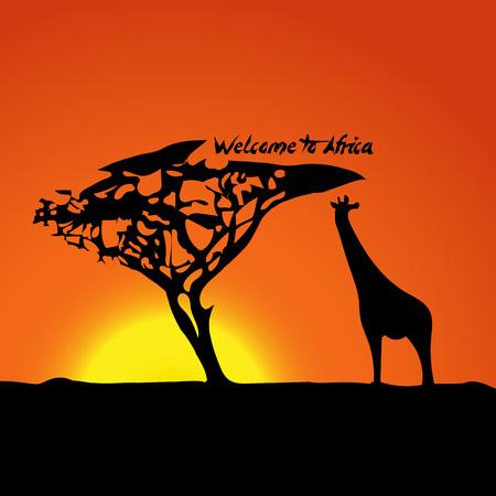 animales safari: la puesta del sol africano típico con la silueta de una jirafa y un árbol en la naturaleza. Ilustración del vector. Vectores
