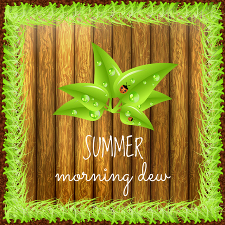 dew: Summer positive postcard for congratulations with beginning of summer. Green leaves with dew drops and ladybugs. Summer card. Summer background. Summer vector illustration