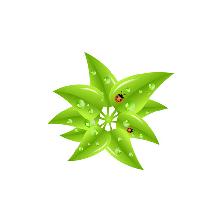 dew: Green leaves with dew drops and ladybugs. Spring vector illustration. Illustration
