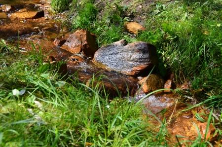 streamlet: Forest Streamlet  Stock Photo