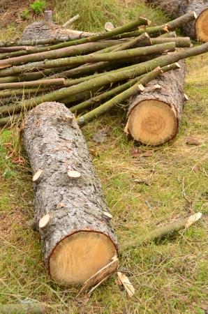 boom kappen: Snijd het kappen van bomen over het aanmelden